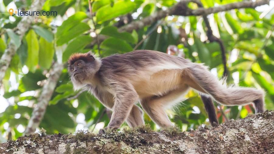 Wild in this Exquisite Uganda