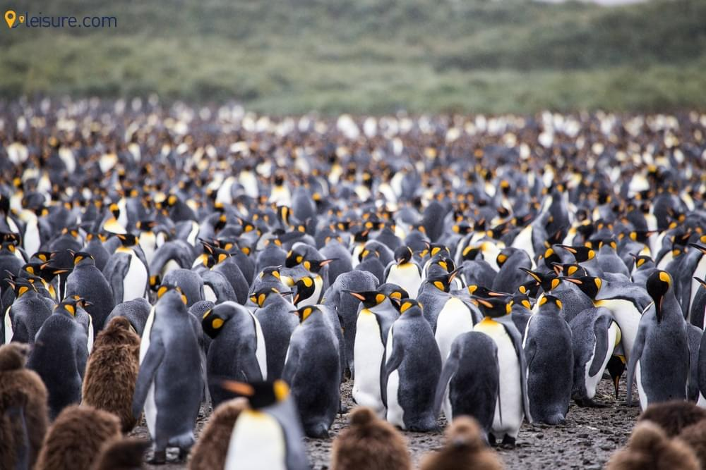Adventure In The Southern Hemisphere With This Antarctica Travel Guide