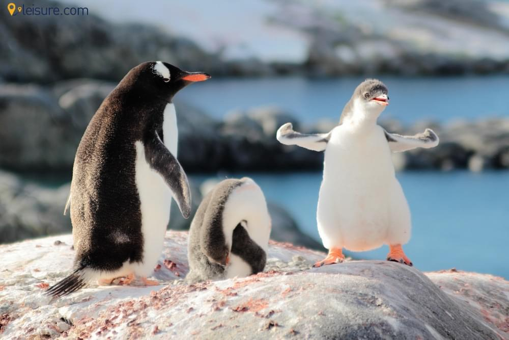 Enjoy White Christmas With Penguins In Antarctica Family Vacation