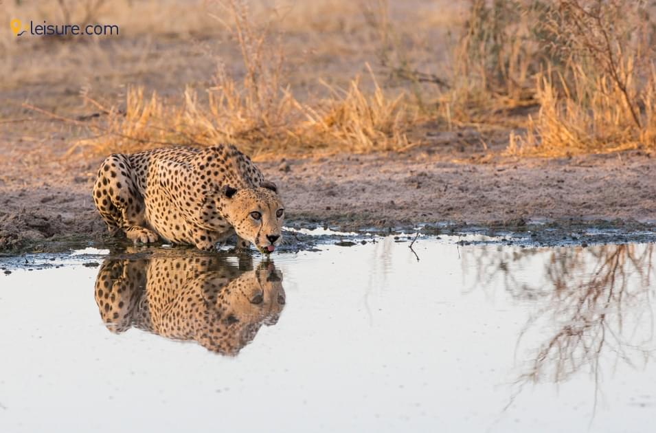 Fantastic Experience In Botswana Safari