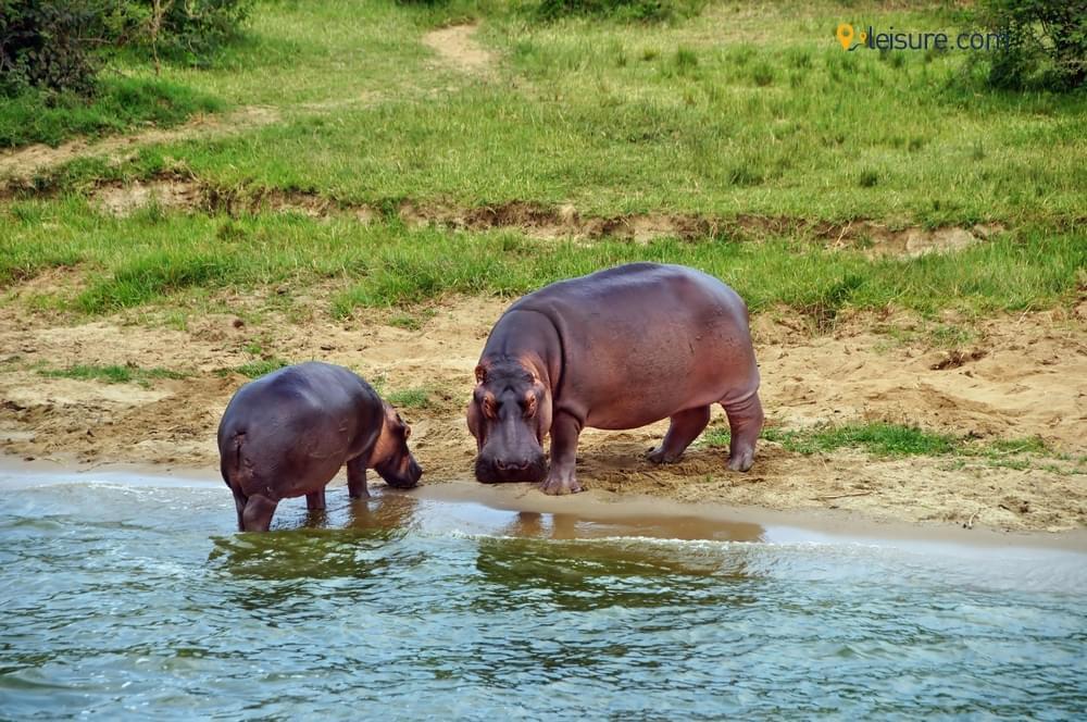Safari Adventure to the