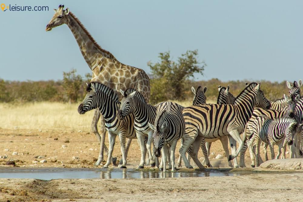 Culture and Wildlife of Namibia
