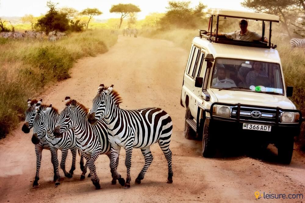 Tanzania Safari 1
