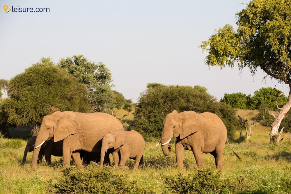 In Botswana Safari