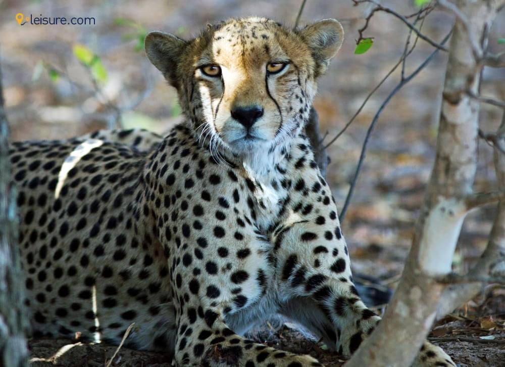 An Iconic Zimbabwe Safari