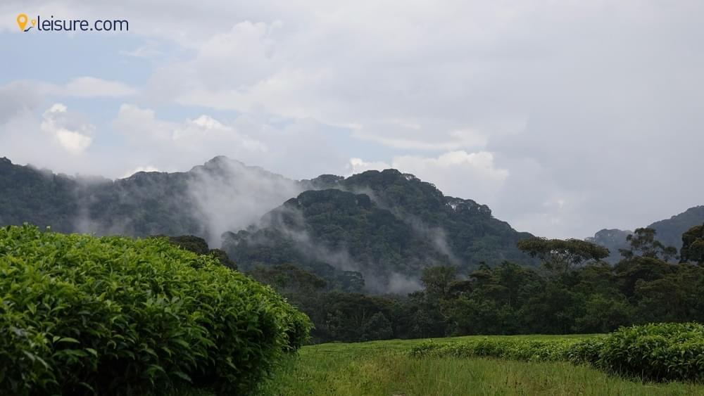 The Incredible Gorilla Trekking d