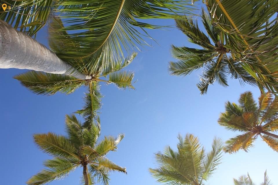 Palm 56