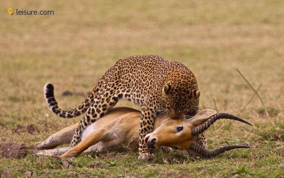 Wonderful And Memorable Zambia And South Africa Safari Experience