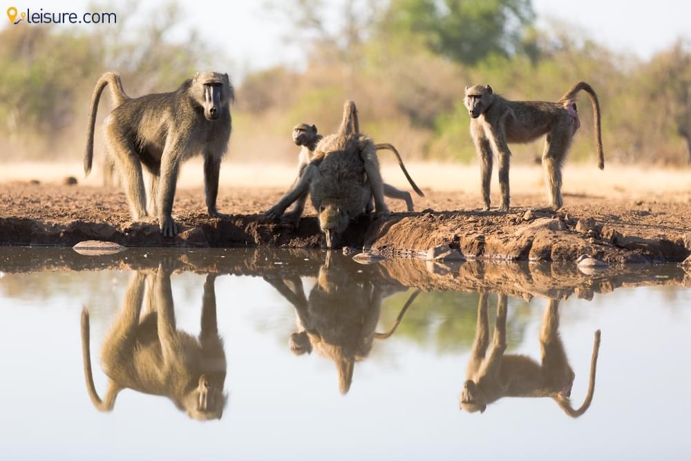 The Wilds In Botswana