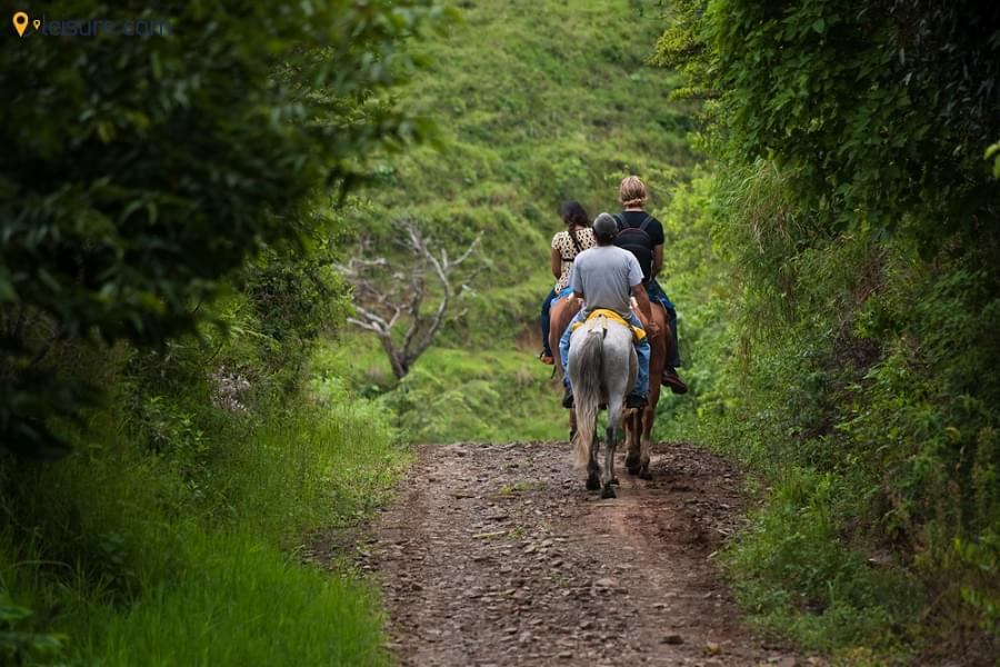 4 Days Costa Rica Itinerary - Monteverde Cloud Forest