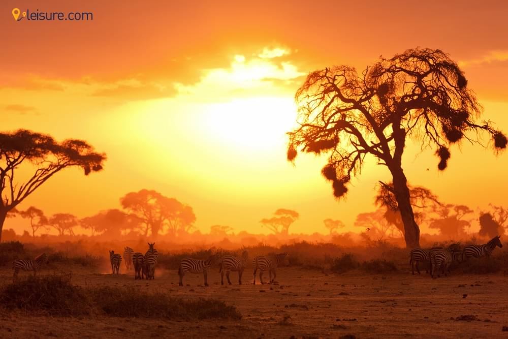 Safari Itinerary for your Wanderlust
