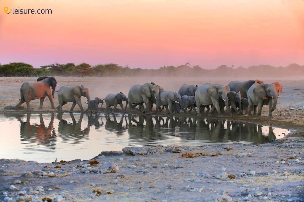 Sunrise and Wildlife in Namibia