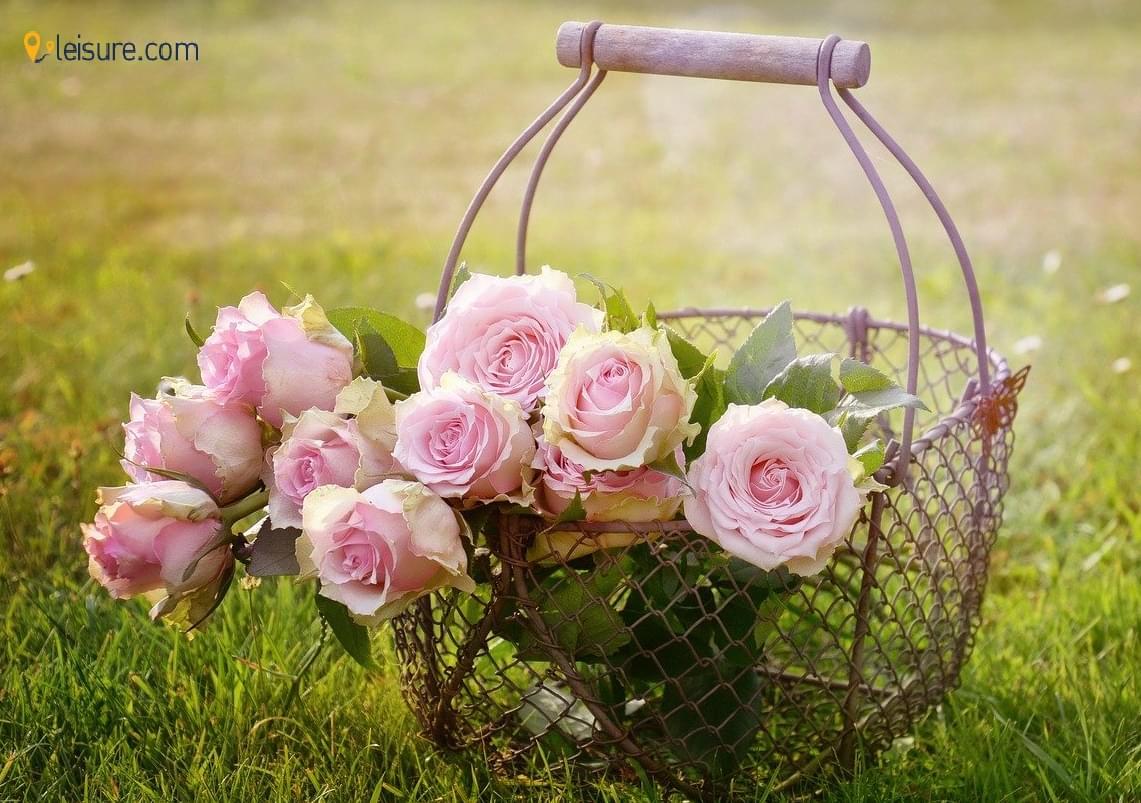 roses p