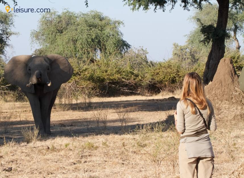 Zimbabwe Safari - My Wonderful Experience