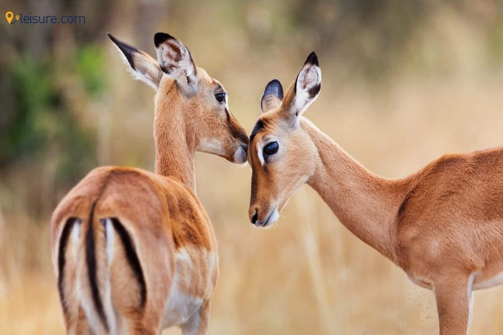 Kenya Safari Vacation