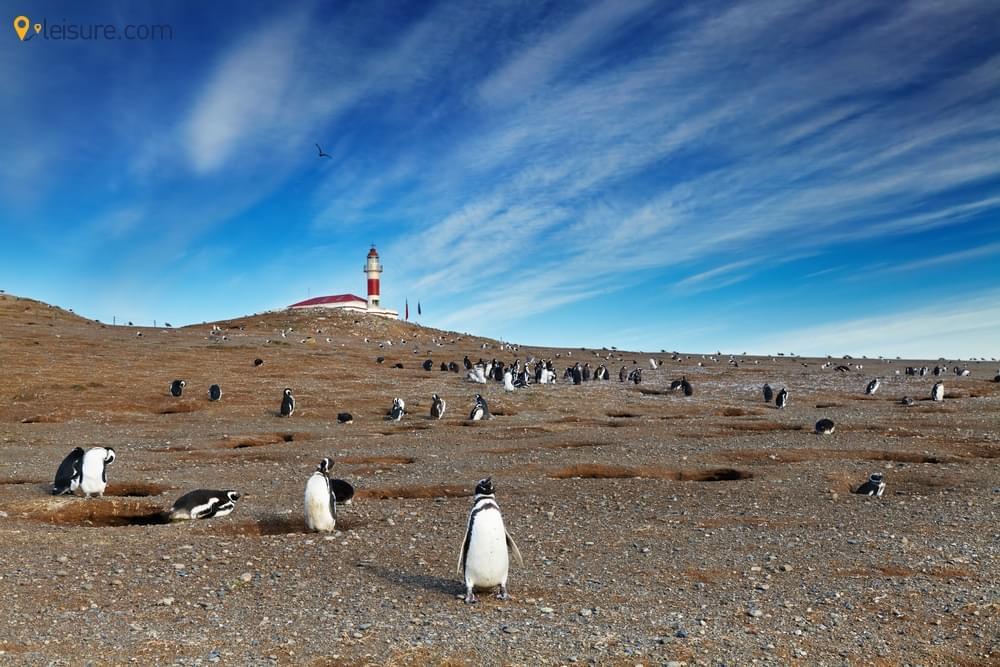 Best Antarctica Tourist Guidevv