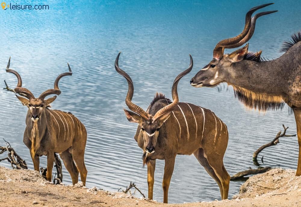 Namibia Safari  3