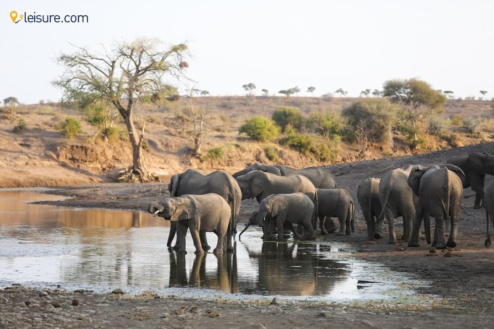 The Wilds In Botswana S