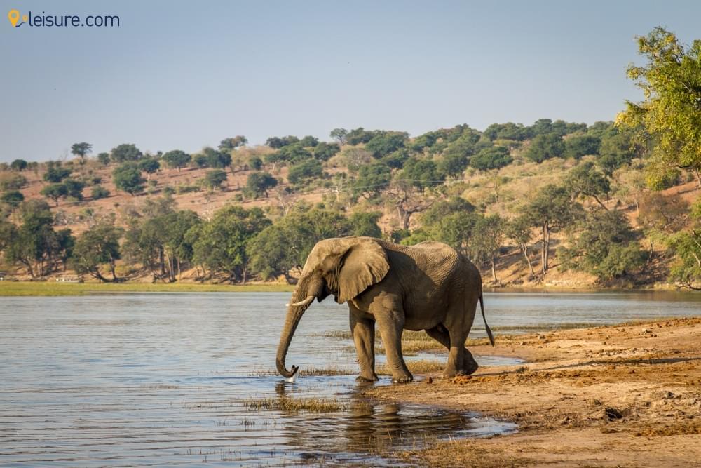 Spot In Botswana Safari