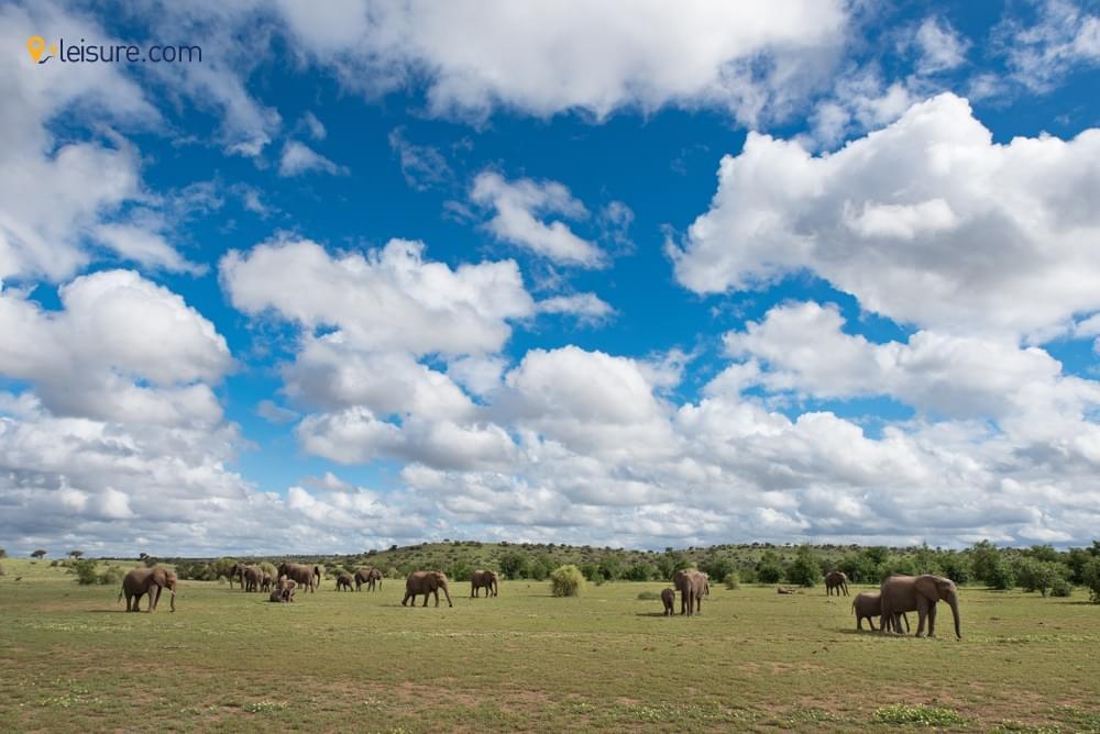 Botswana Safari Campsa