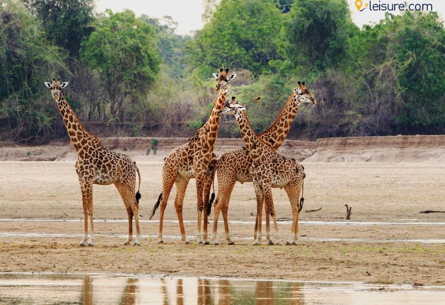 Travel Review: Adventurous Safari Tour To Zambia, Africa Safari, Zimbabwe..