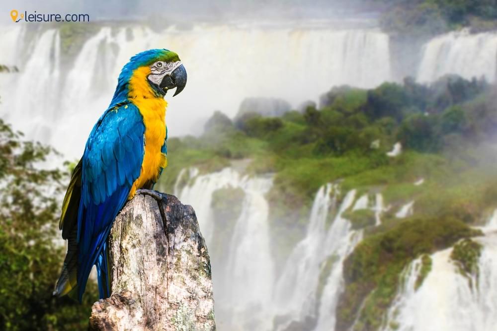 Hike The Roaring Iguazu Falls In Latin America Adventure Travel