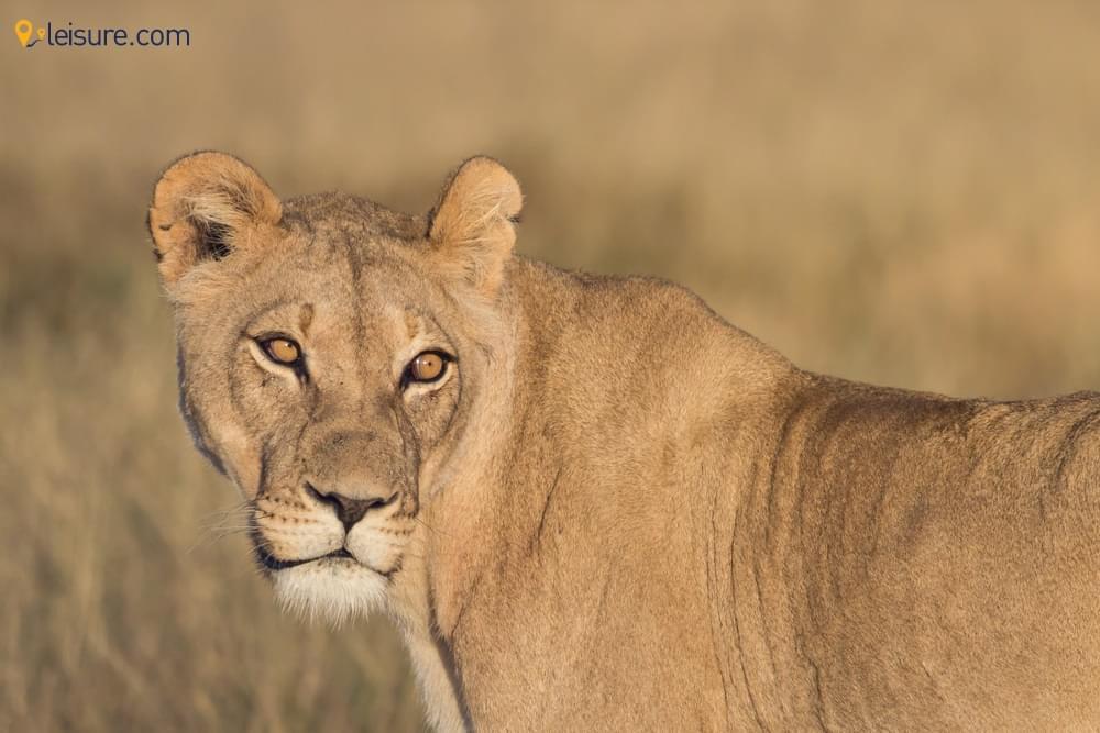Botswana Safari Vacation Package