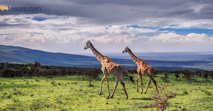 Explore the mysterious National Parks through 9-Days Tanzania Safari Package