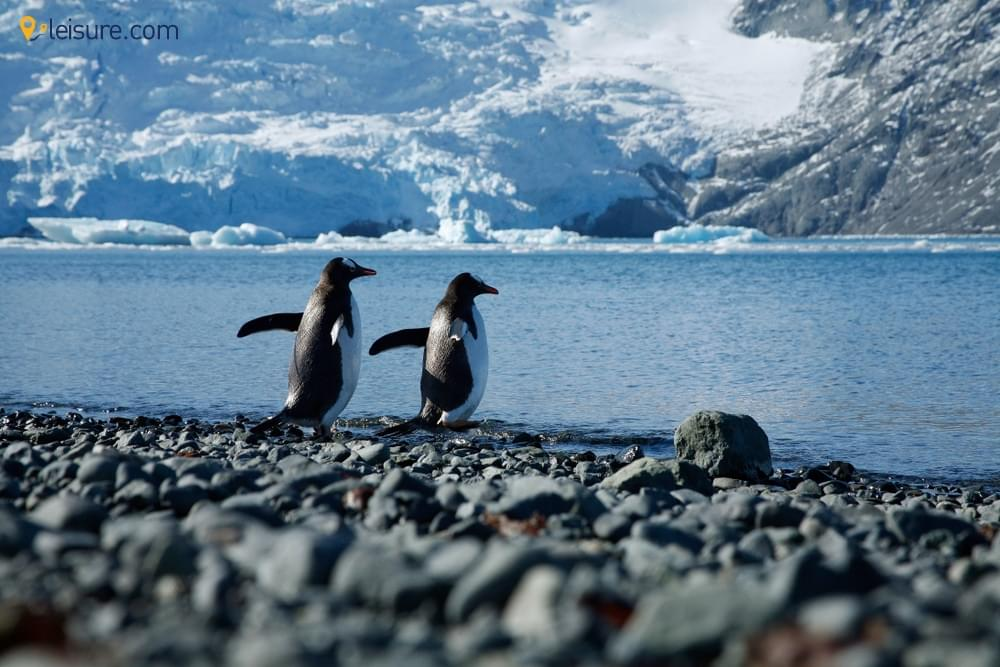 Explore The Seventh Continent, Antarctica With This Tour Guide
