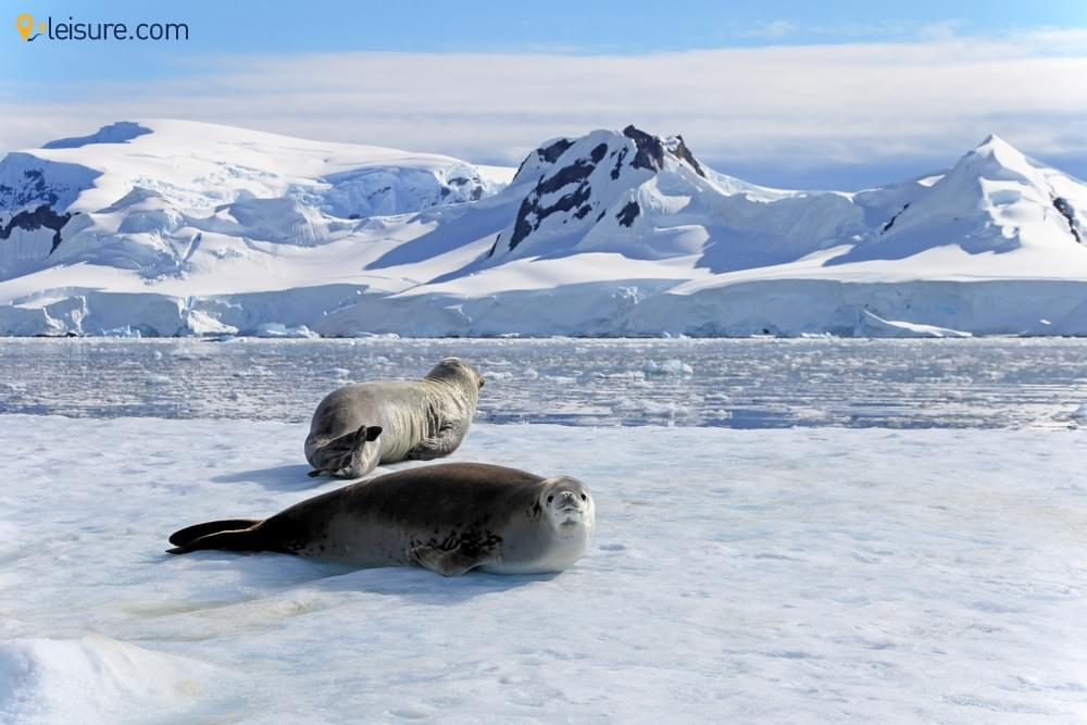 Sail With Sea Whales In A Classic Antarctica Family Vacation