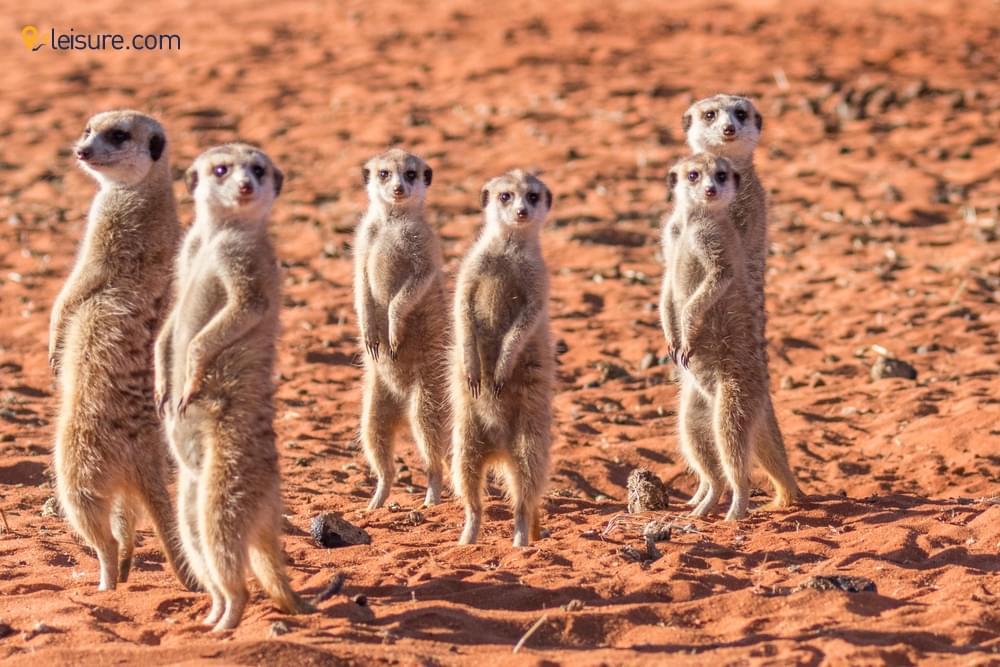 Botswana Safari Vacation