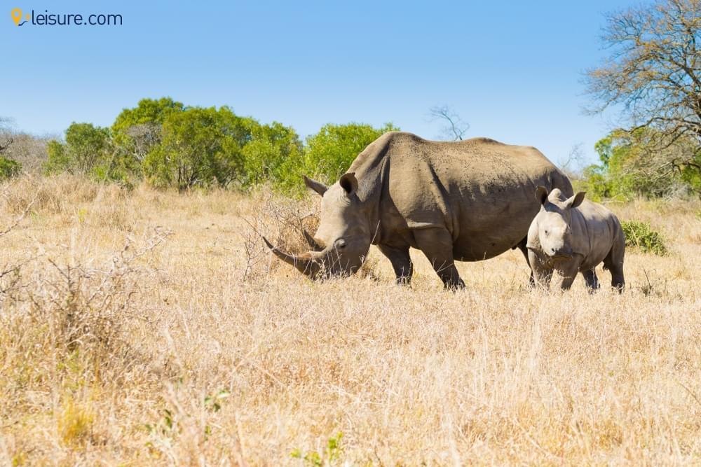 South Africa Safari Vacation Packages
