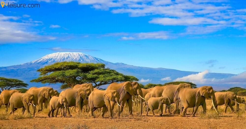 An Adventurous Journey Through Northern Circuit In Tanzania Safari