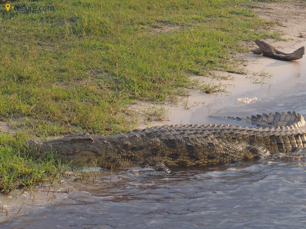 o Wetland Safari in Botswana
