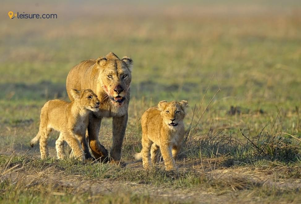 Travel Review: Super-awesome Safari Tour in Tanzania