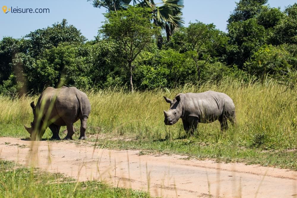 Uganda-Rwanda Safari