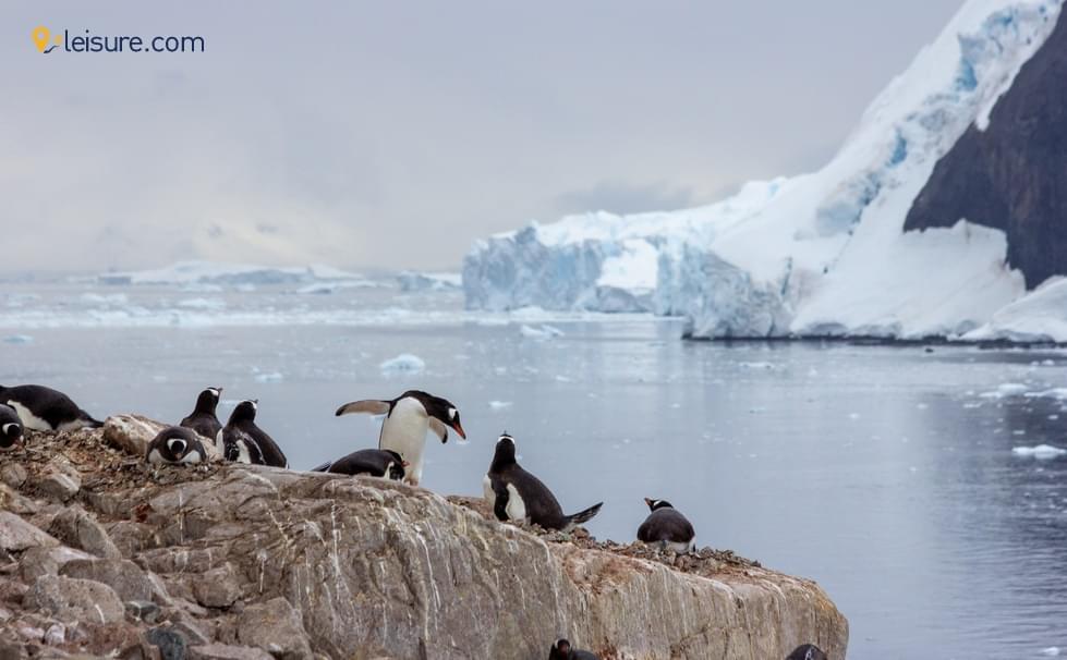 Incredible Tour To Antarctica