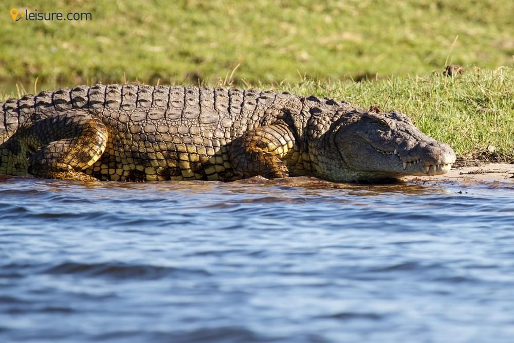 Mammals, Parks, Okavango
