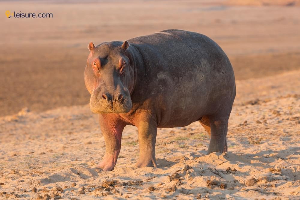 Safari to Zambia and Botswana d