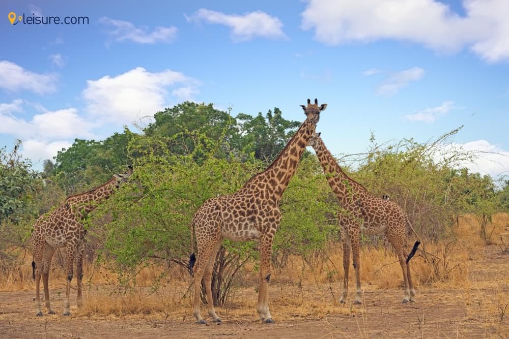 Customized 8-Days Zambia Safari