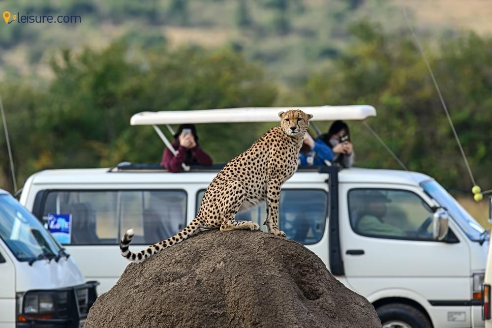 Kenya Safari Vacation s