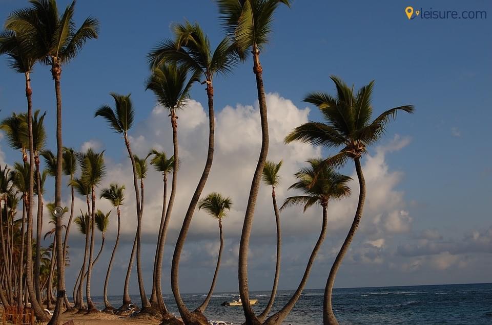 Punta isle