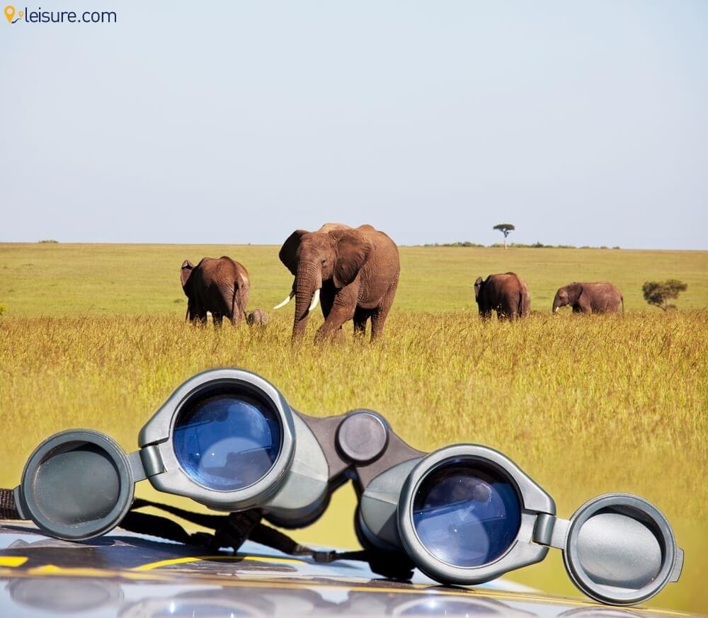 Namibia Safari  1