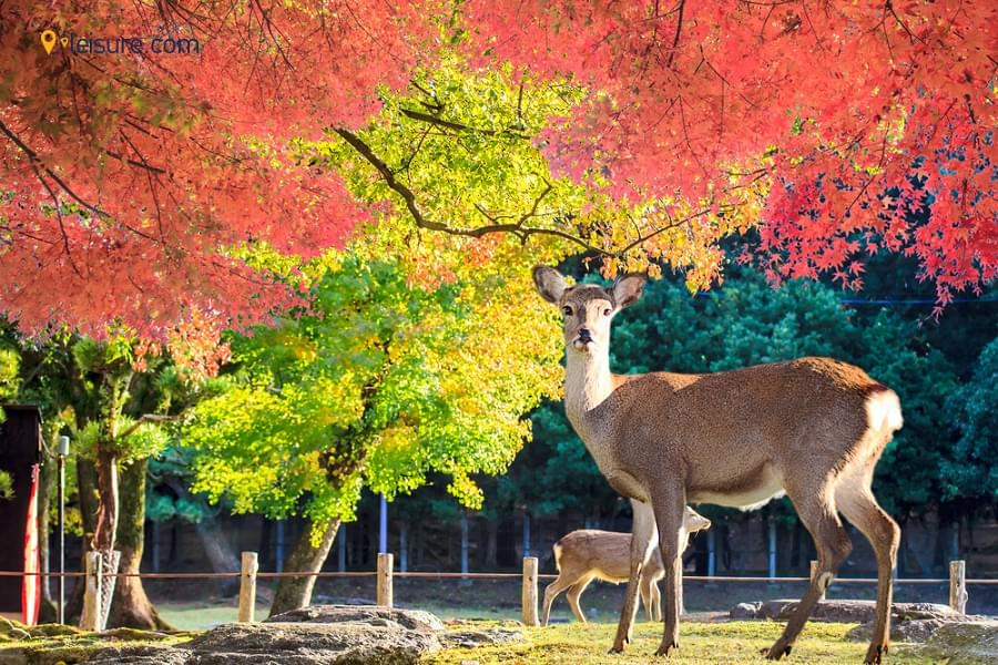 A 5-day Japan Vacation Tour Package to Get the Best Out of Your Japan Tour