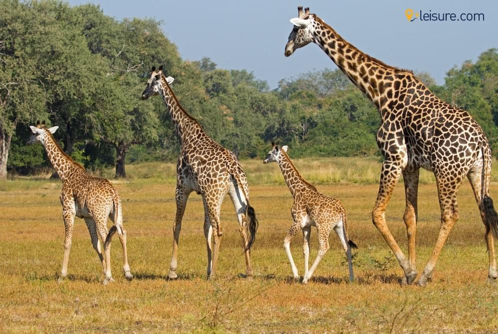 Safari to Zambia and Botswana