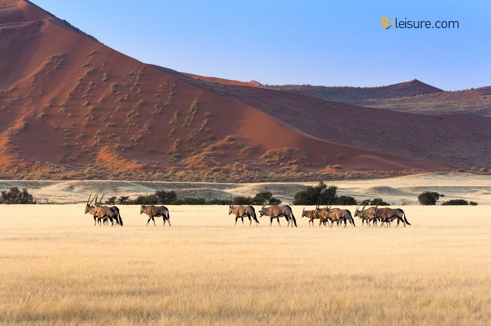 Namibia Safari Holiday