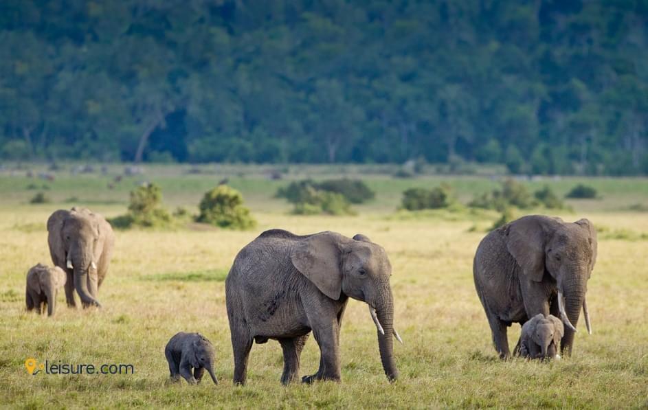 Travel Review: Adventurous Africa Safari Trip- Kenya, Maasai Culture..