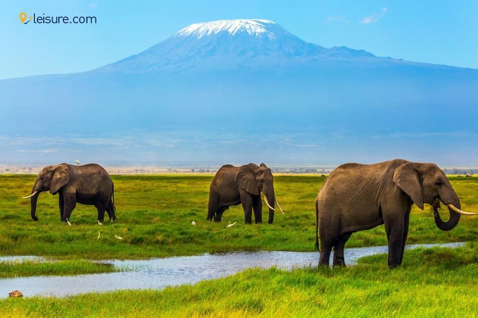 Travel Review: Luxury Africa Family Safari, Tanzania & Kenya..