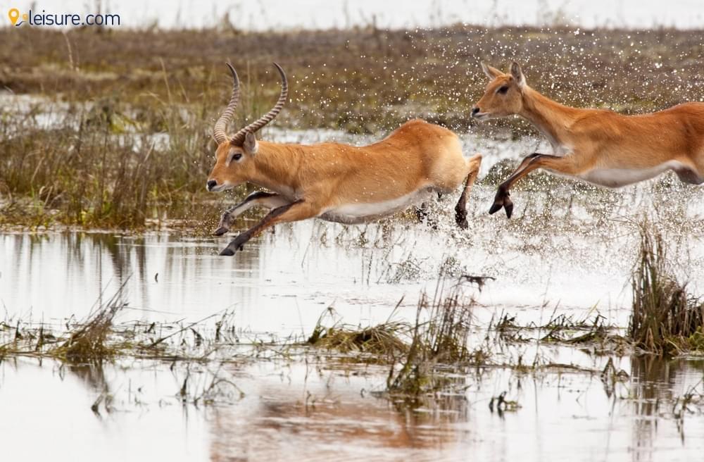 Camping Spot In Botswana S