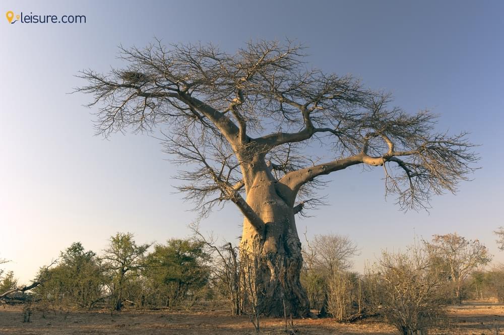 Amazing and Cheap Zambia Safari